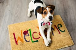 Dog Food Reviews – The Healthiest Nutrition for Your Best Friend