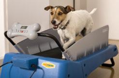 Best Dog Treadmills 2017 (New Update)